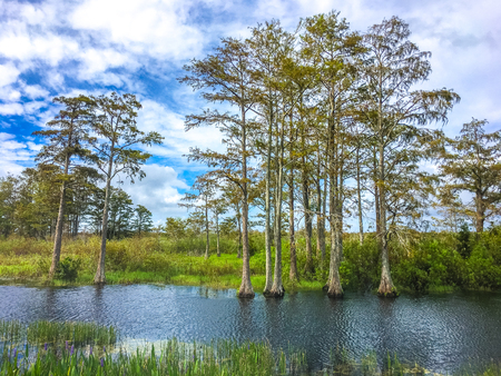 autumn day in the swamps of florida