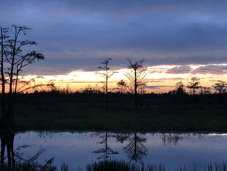 sunset and cypress tree reflections