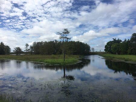 day in the Louisiana Swamp