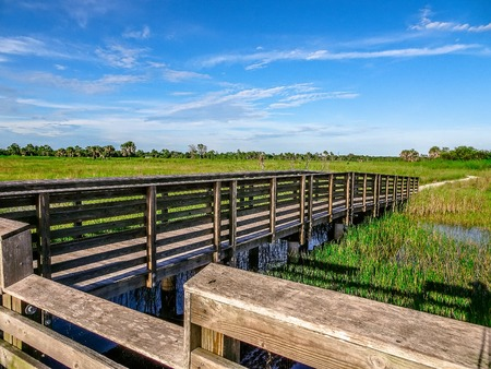 dock over the marsh in a Florida Swamp