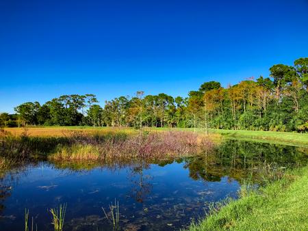 autumn in the swamp Stock Photo