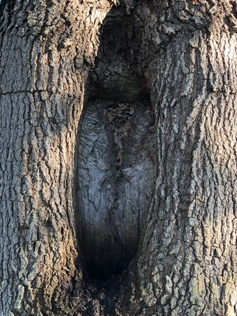 tree trunk with giant hole in the center makes a textured natural background