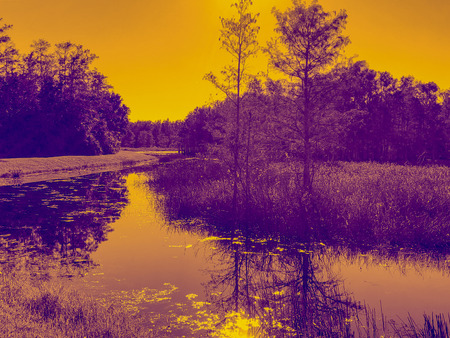 digitally altered swamp photograph of a Louisiana Bayou near Louisiana State University in Baton Rouge.  purple and gold