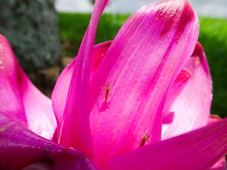bug crawling on a hot pink flower petal