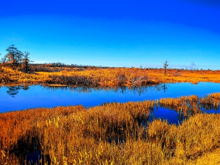 blue skies and green grass in the swamp