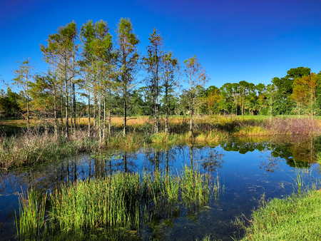 marsh and river grass in the swamps of Louisiana 스톡 콘텐츠
