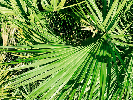 a palm tree leaf in focus creates nice background