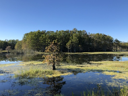tree island and grass in the swamps