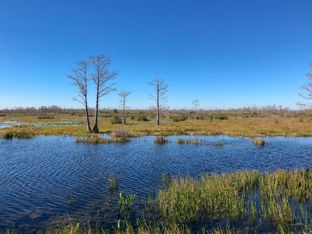 windy day in the winter swamps of Florida