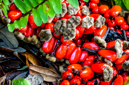 red palm seeds in a pod and a fern leaf