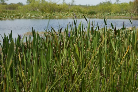 plants and flowers in the Florida Everglades