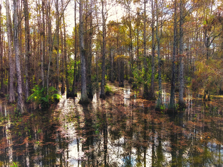 landscape of Big Cypress National Swamp in Florida Banco de Imagens