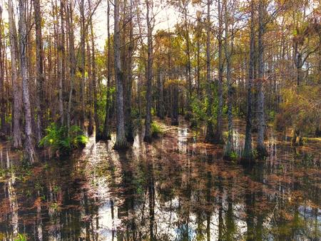 landscape of Big Cypress National Swamp in Florida Banque d'images