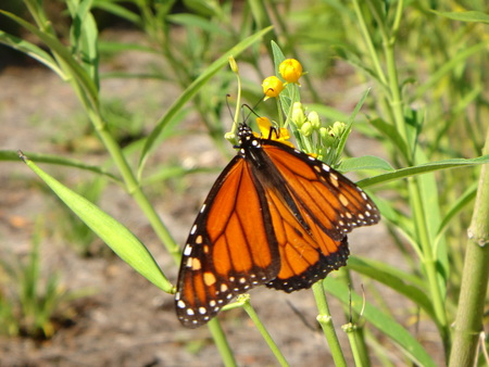 orange butterfly on a blade of grass Stock Photo