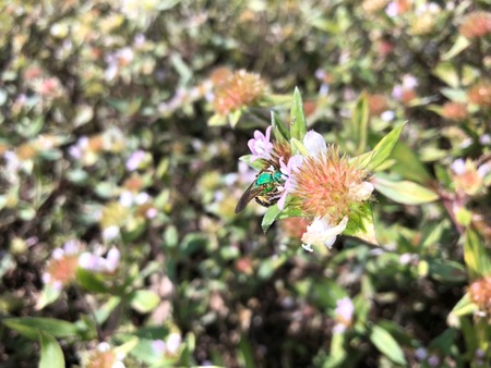 green bee landing on a weed in the swamp Stock Photo