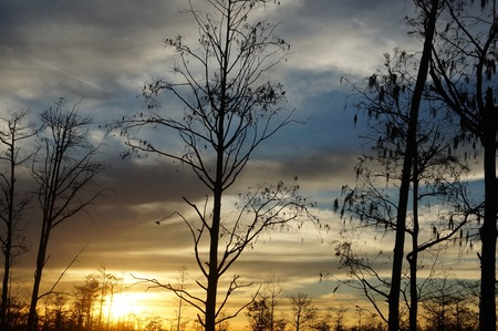 sunset silhouettes in the swamps of Louisiana