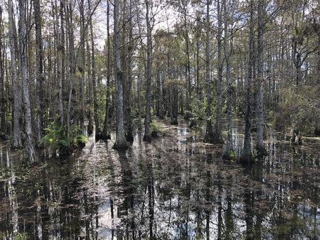 landscape of Big Cypress National Swamp in Florida Banco de Imagens