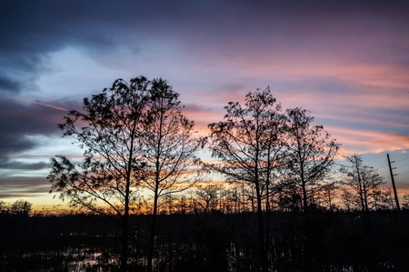 dawn in the swamps of Florida