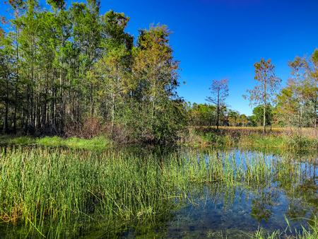 autumn in the swamp 写真素材