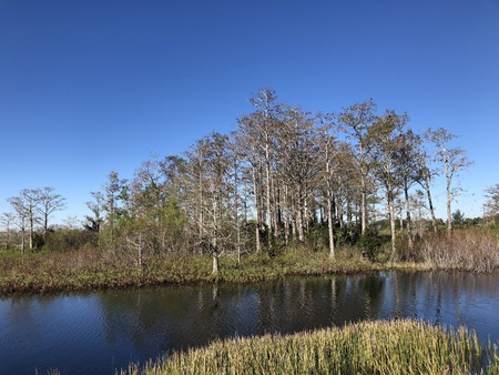 hot summer day in the sloughs of a cypress marsh