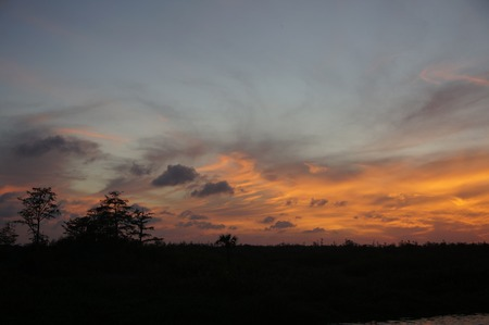 sunset in the everglades shows cypress trees and bayou Stok Fotoğraf