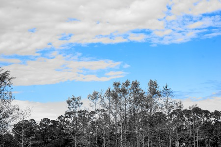 swamp in south Florida with selective blue color sky Stock Photo