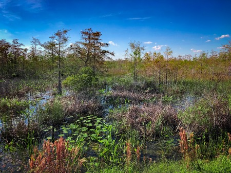 Loxahatchee Slough Natural Area Palm Beach Gardens, Florida. Swamp Landscapes and wetland fauna. Stock Photo