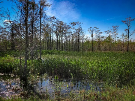 Loxahatchee Slough Natural Area Palm Beach Gardens, Florida. Swamp Landscapes and wetland fauna. Stockfoto
