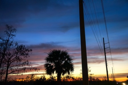 sunset silhouette of palm trees and power lines Imagens