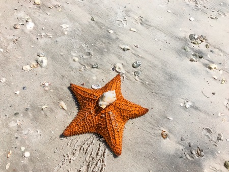 starfish and shells on the sandy beach shore