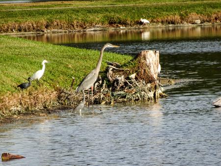 reiger en een ibis jagen op een prooi aan de kust