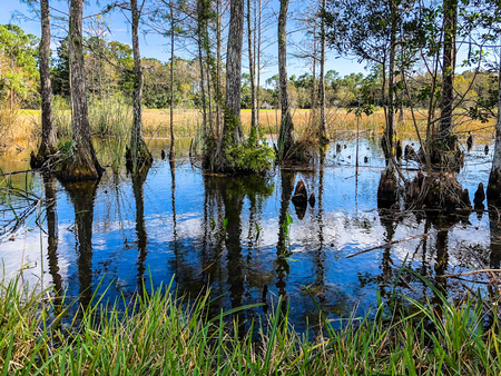 landscape of Big Cypress National Swamp in Florida Stock Photo