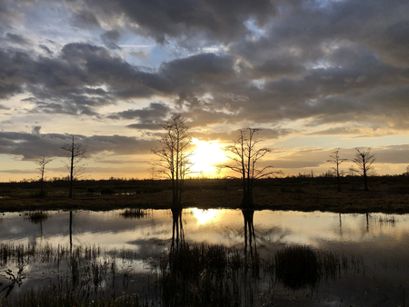 huge orange sun setting behind the cypress trees in a swamp