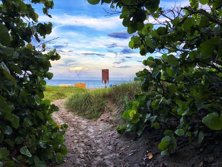 enchanted beach path through the trees at sunset