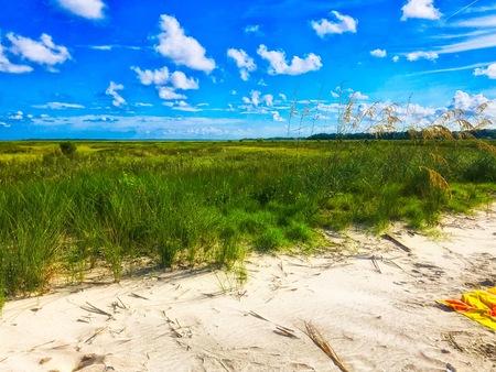 Marsh Grass on No name island in the Charleston Harbor