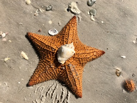 starfish and shells on the sandy beach shore