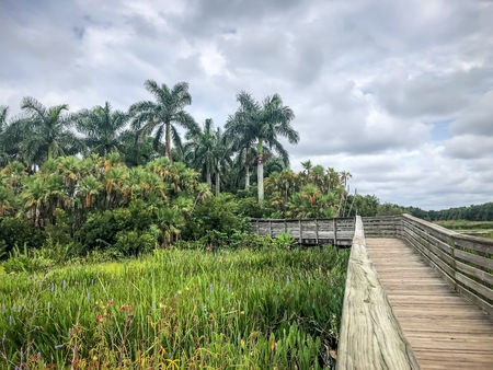 one elevated path in a Florida swamp in Green Cay nature preserve in Florida