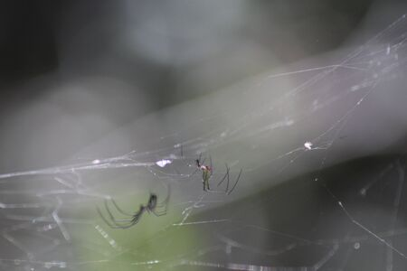 spider in a web in woods