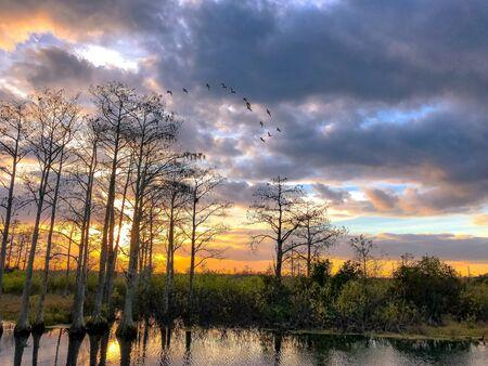uccelli nel tramonto di una palude di cipressi
