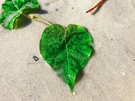 one heart shaped leaf on the beach Foto de archivo - 133544985