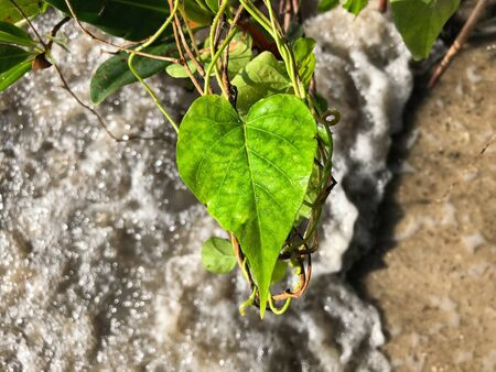 one heart shaped leaf on the beach Foto de archivo - 133544987