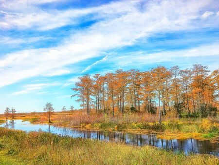 fall foliage in the swamp Stock Photo