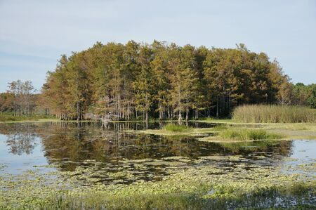 beautiful green, orange and yellow colors in cypress dome
