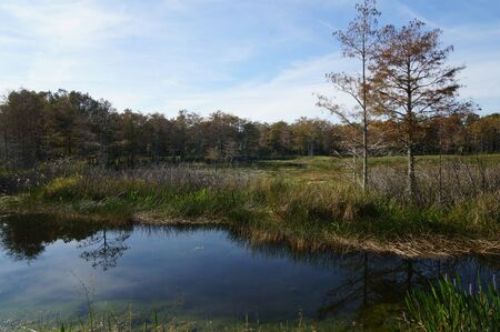 autumn in the swamp of Florida
