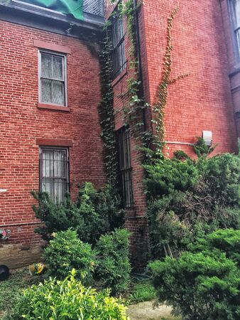 tall brick apartment building with vines in decay