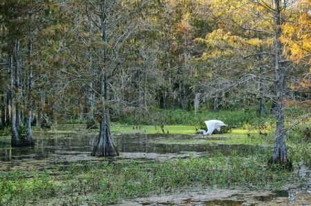 big bird in the cypress swamps