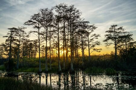 reflections of a sunset in the Florida swamps Banque d'images - 138353166