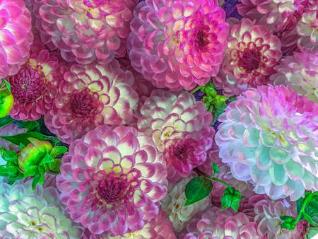 close-up photograph of flowers in focus