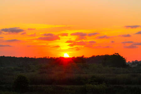 Pink and orange sunrise over the swamp in South Florida.