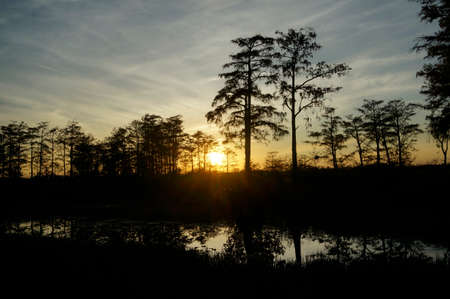 Sunset in the swamp of Florida